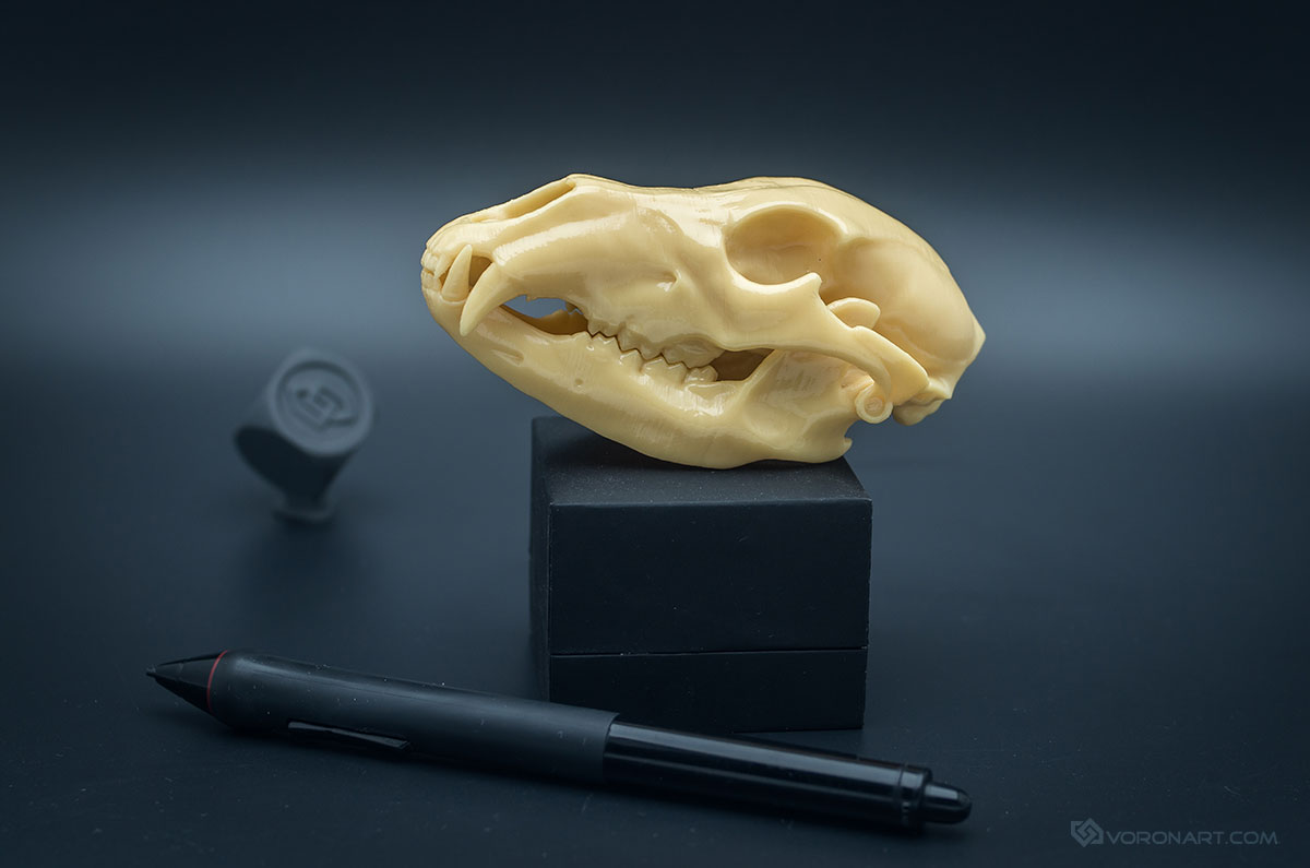 Grizzly Bear Skull replica scale model with a jointed Jaw